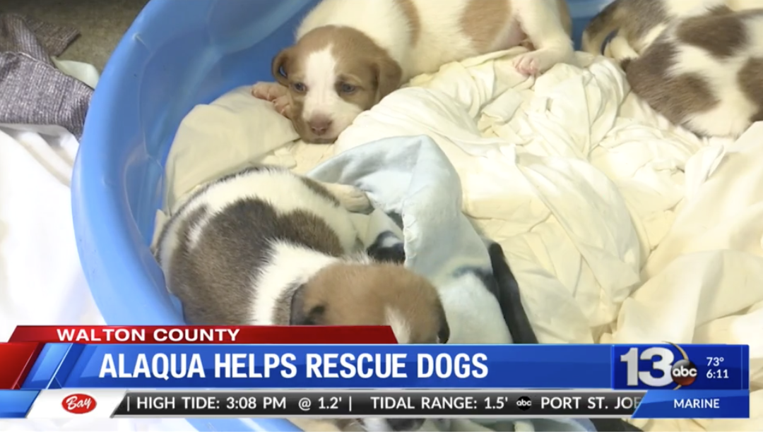 Alaqua Animal Refuge Helps Rescue 180 Dogs from Being Euthanized